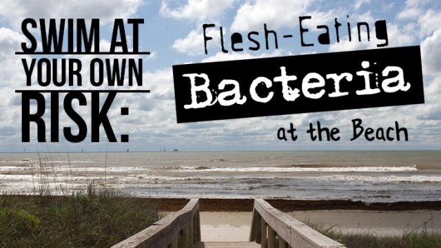 Swim At Your Own Risk: Flesh-Eating Bacteria at the Beach