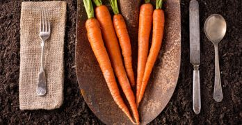 carrots-are-great-for-health