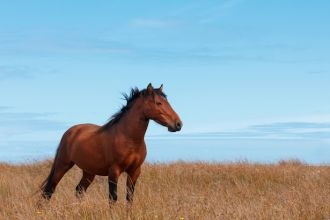 Wild horse in the field on ocean shore