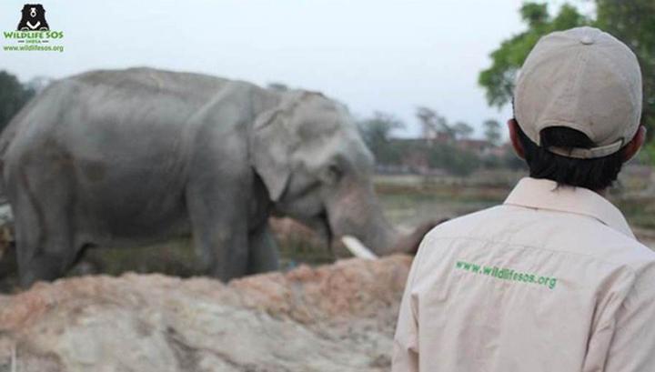 the-worlds-unluckiest-elephant-finally-freed