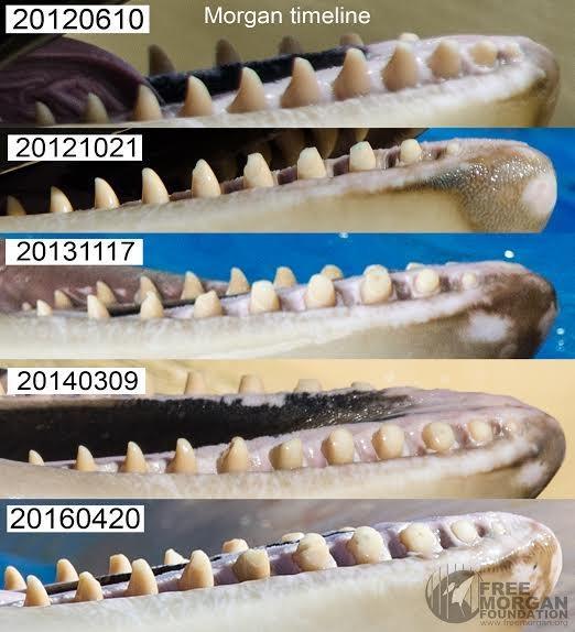 orca-teeth-2