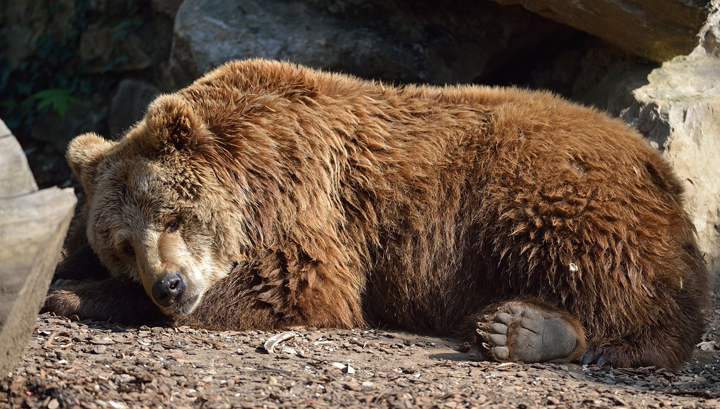 5 Lessons Hibernating Bears Can Teach Us About Health