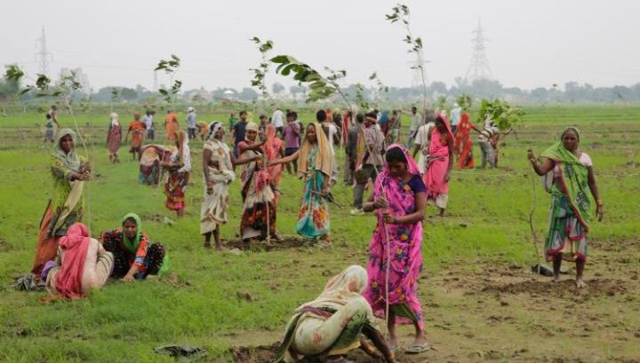 Indian women plant saplings in the attempt to set a record (Photo credit: AP Photo/Rajesh Kumar Singh)