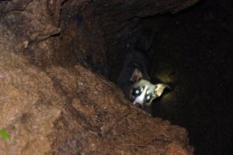 dog-found-in-a-sinkhole