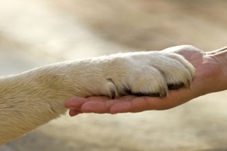 protect-your-dogs-paws