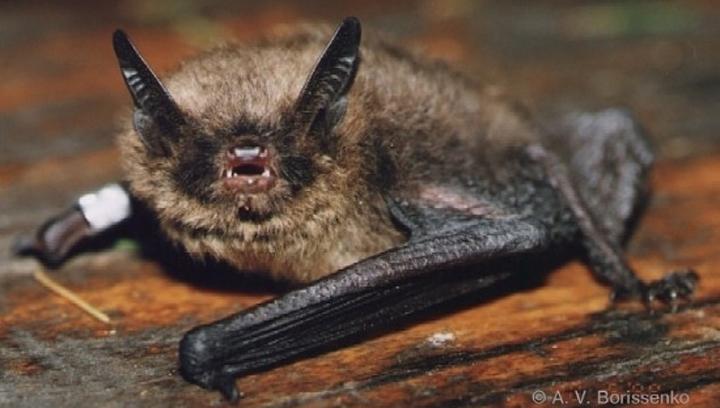 brants-bat