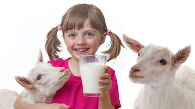 Lifestyle Wellness Blog Posts 2016 8 2 Goats Milk The Other Alternative To Cows Milk >> 5 Reasons To Drink Raw Goat S Milk