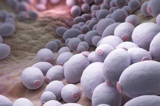 candida-albicans-bacteria