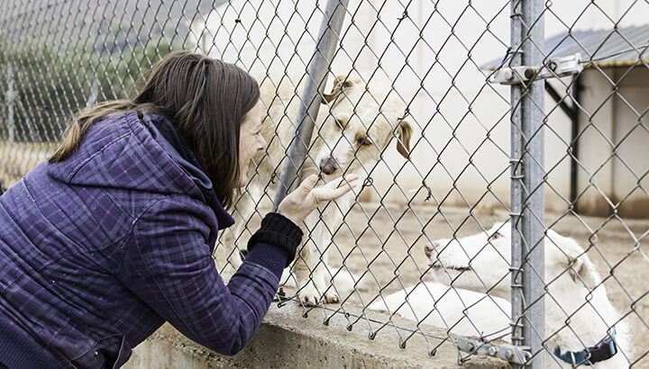 Give Back To Your Community And Help Animals