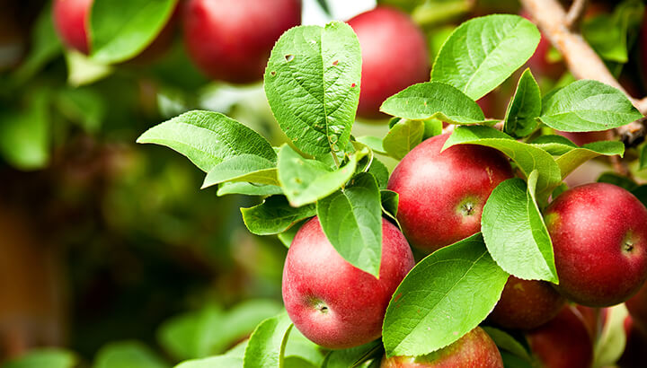 Best foods for blood sugar apples