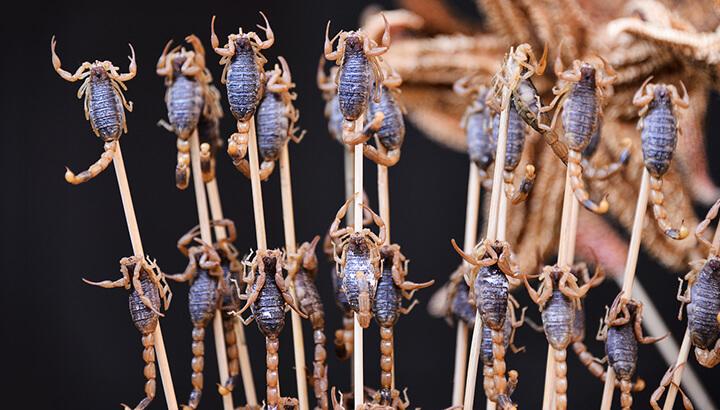 Edible bugs fried scorpions