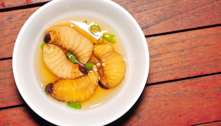Edible bugs worms in soup