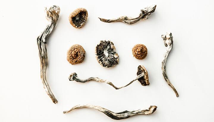 Magic Mushrooms psilocybin