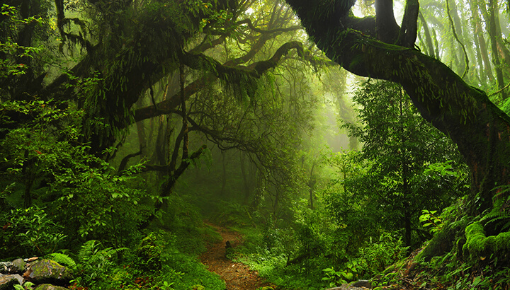 The tropics are highly impacted by climate change and widespread extinctions