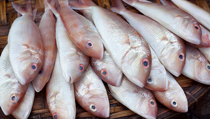 Your fish might be contaminated through seafood fraud