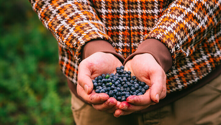 Blueberries can help your penis function better
