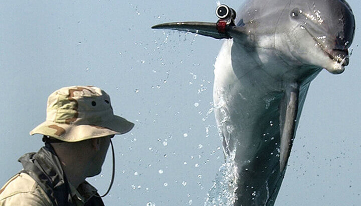 Dolphins helping to save vaquitas