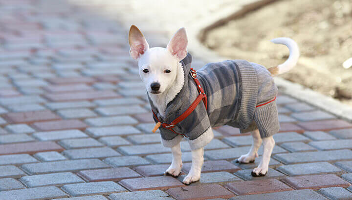 Dress up dogs with a fitted sweater