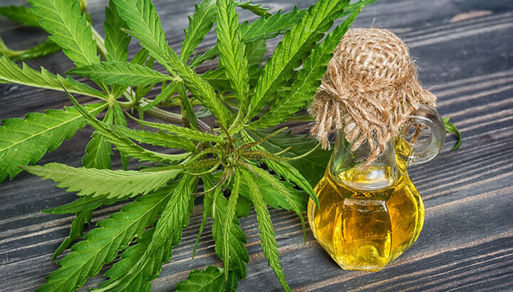 Hemp oil can easily be integrated into cooking