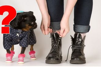 Is dressing up dogs animal cruelty