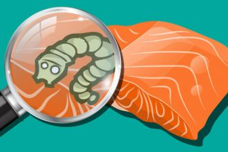 Japanese salmon found to have a tapeworm