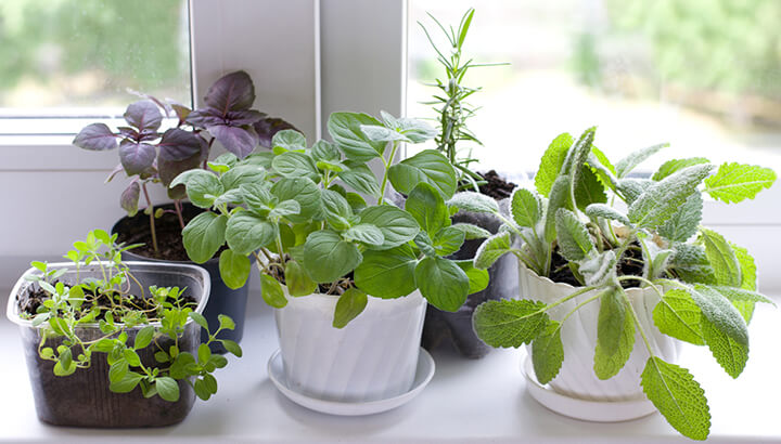 Make an herb garden for the inflammation challenge