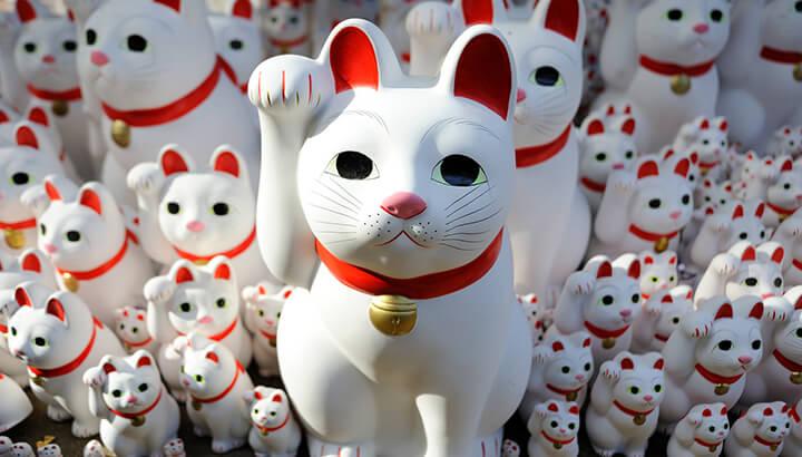 Maneki-Neko brings good luck in Japan