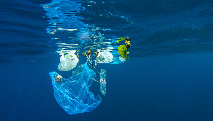 Plastic in the ocean impacts marine life and humans