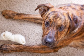 Rawhide may be dangerous for your dog