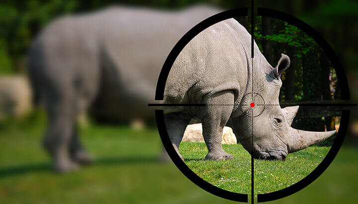 Rhinos are hunted for their horns with advanced technology