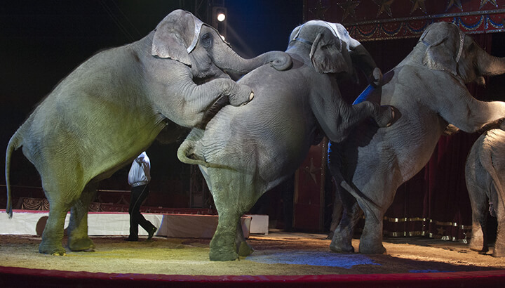 Ringling Bros. closing down after elephant abuse allegations