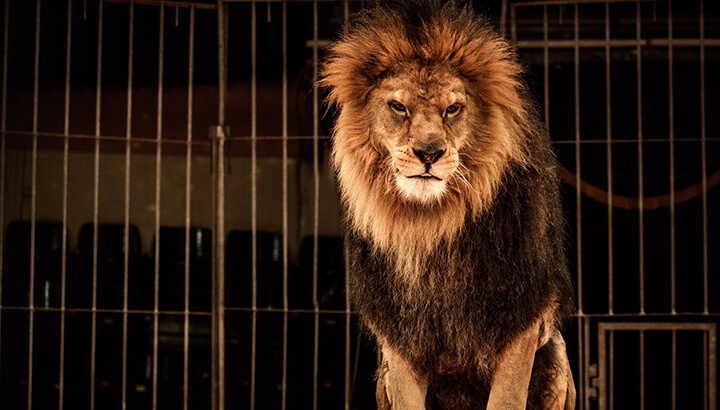 Ringling Bros. closing down due to animal abuse allegations and falling ticket sales