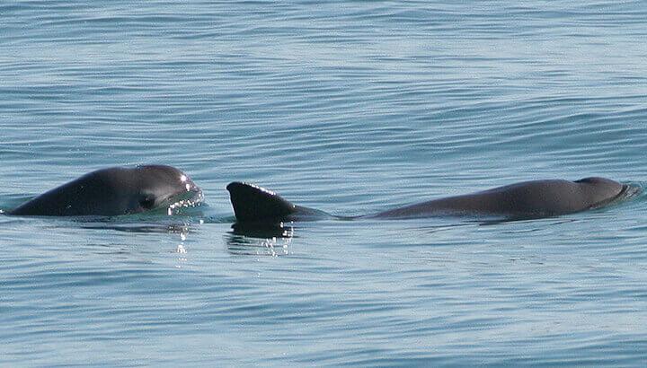 (Photo Courtesy: Paula Olson, NOAA)