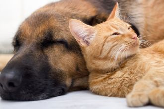 Ways to keep your pet cancer-free