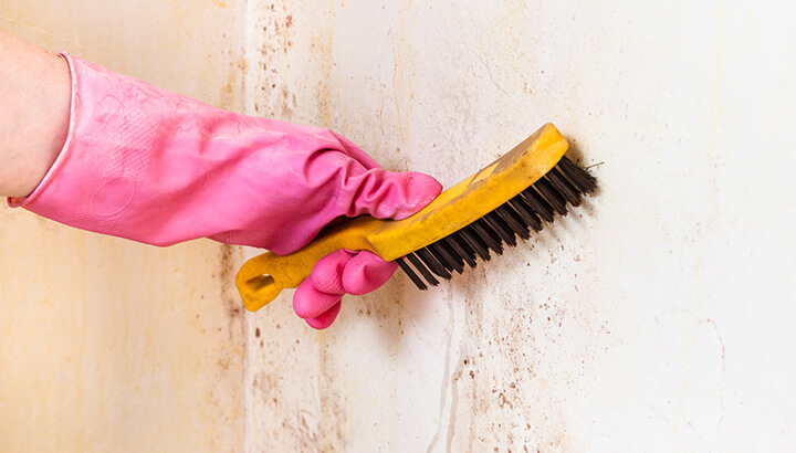 Cleaning the kitchen to get rid of mold and dirt can protect your health.