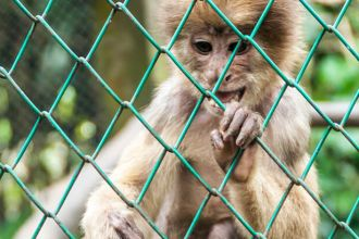 Group of capuchin monkeys escapes from the zoo
