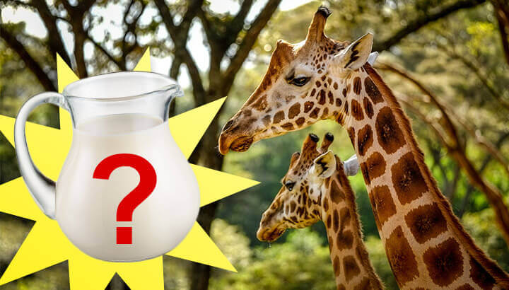 Is Giraffe Milk Really The Next Superfood