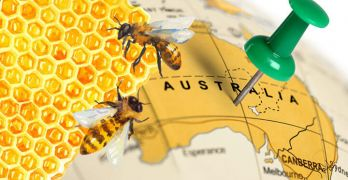 Manuka honey relative found in Australia