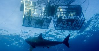 One brave conservationist was recently killed while making a film about sharks