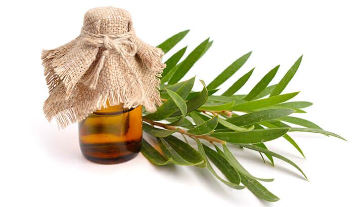 Tea tree oil may be more effective than a golden facial