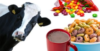This is what cows are really eating