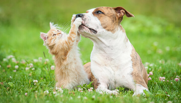 Vinegar can help keep your pets happy and healthy.