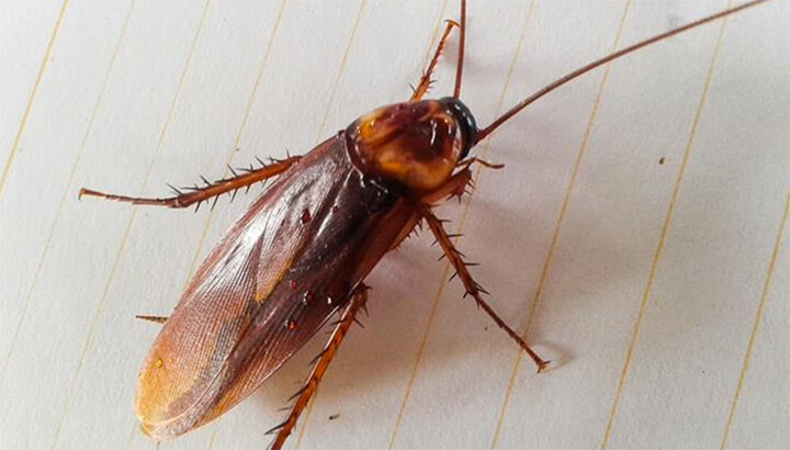 Doctors found a cockroach inside one woman's head.