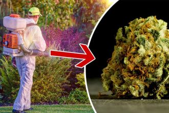 Does your pot have pesticides
