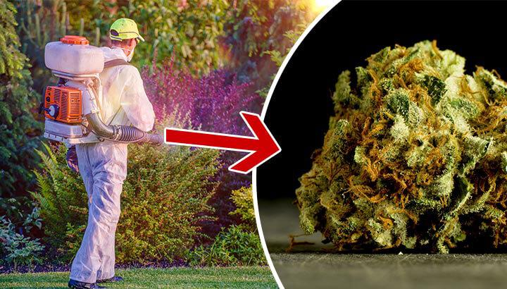 Does your pot have pesticides