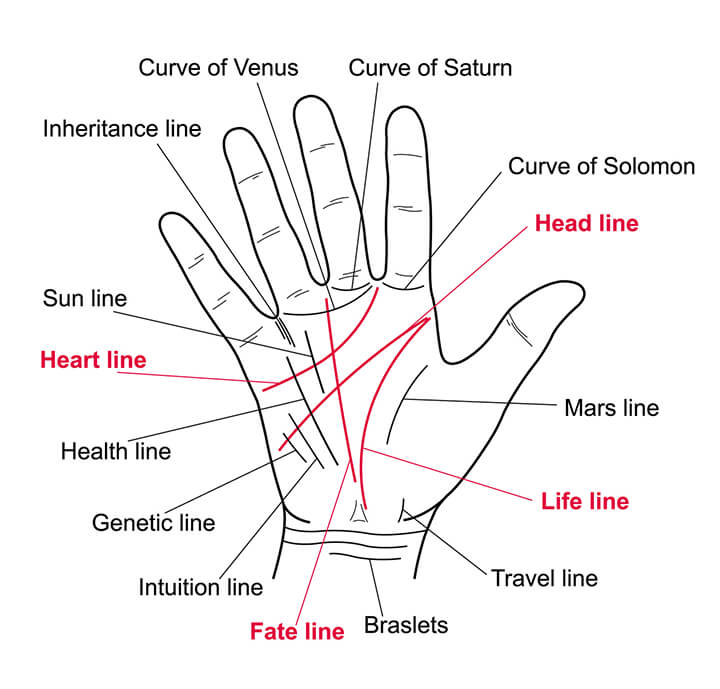 Palm reading looks at four main lines, then other smaller details
