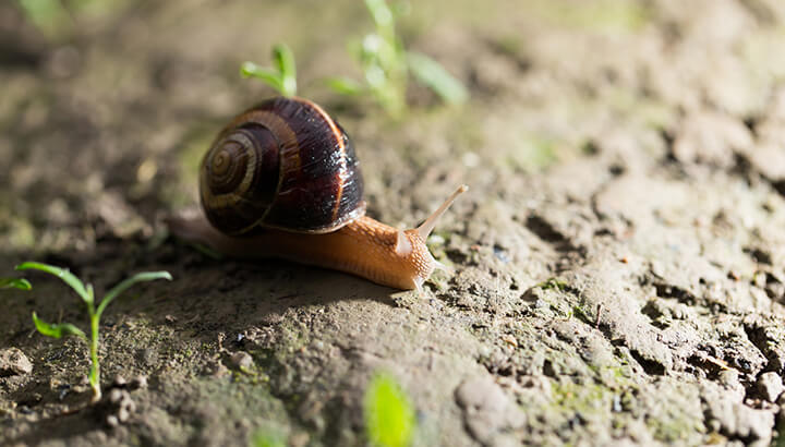 Coke can get rid of snails and slugs in your yard.
