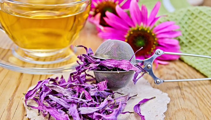 Echinacea is one of the medicinal herbs that can help curb colds.