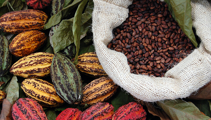 Organic chocolate will be harvested under strict pesticide laws.