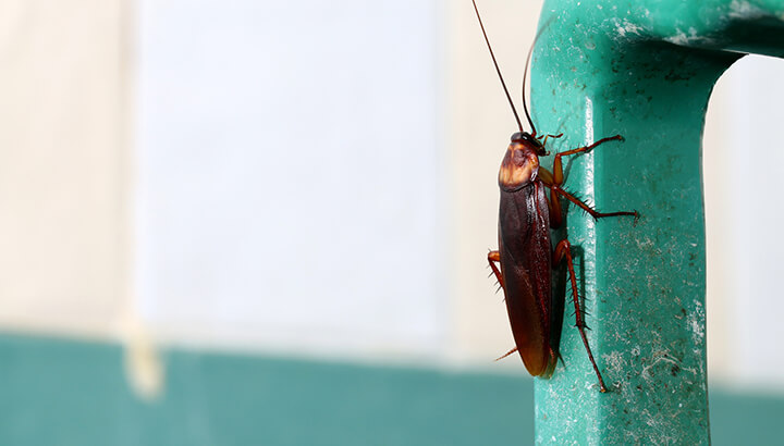 Cockroaches sometimes hide in fountain soda machines.